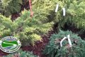 Northern Virginia Nursery - Silverbrook Nursery & Landscaping